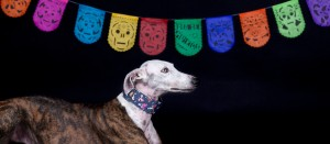 greyhound-dia de muertos-catrina