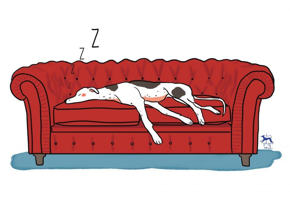 Greyhound, galgo, lebrel, ilustración