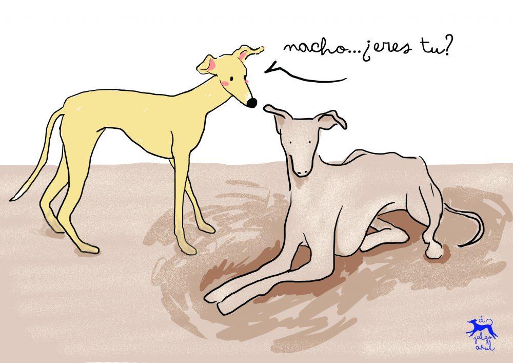 Perros jugando en la arena