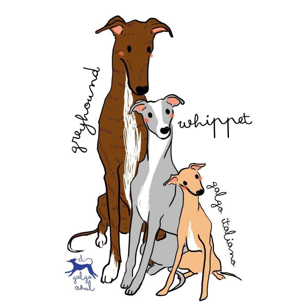 Dibujo greyhound, whippet y galgo italiano