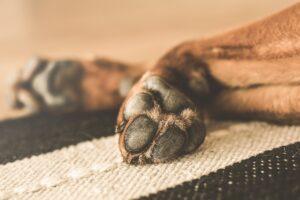 Cómo cuidar las almohadillas de los perros