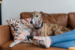 best discounted products for your greyhound and for you
