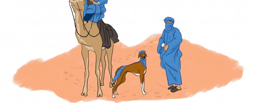 El Azawakh, el perro de los hombres libres