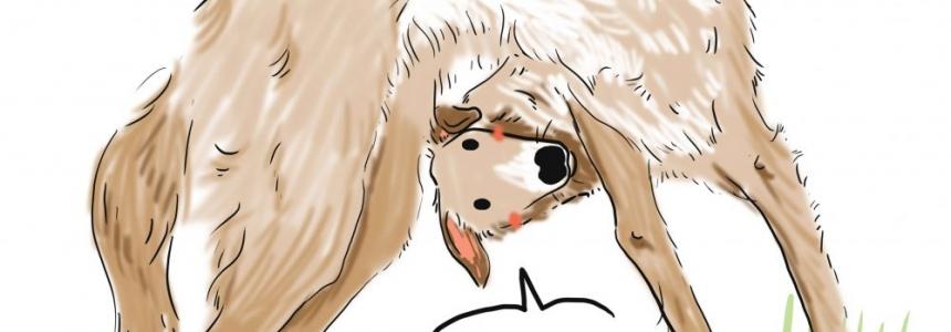 El Borzoi, el perro real de Rusia