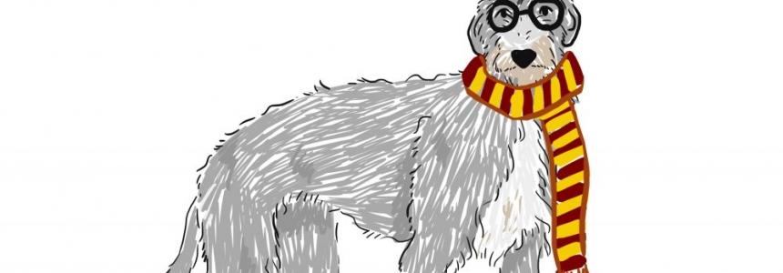 El Deerhound, el Perro Real de Escocia