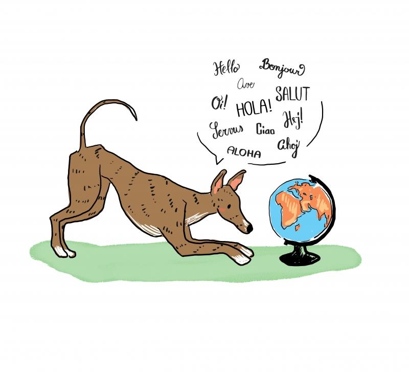 galgo greyhound ilustración