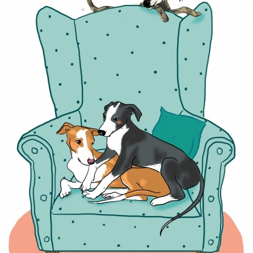 Ilustraciones galgos, whippets